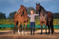 Sportpferde - Holsteiner